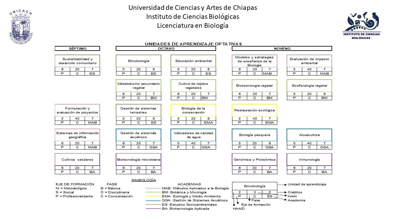 VII Plan estudios 2